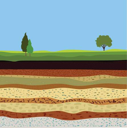 Illustration for soil formation and soil horizons, underground layers of earth, landscape with sky and trees, the geological structure of the earth - Royalty Free Image