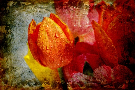 vintage background collage - tulips close up with water droplets