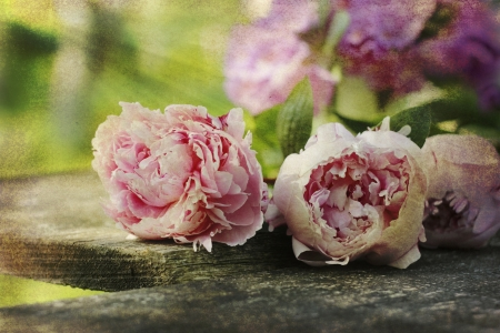 Photo for home garden flowers (peonies) on wooden plank in retro style - Royalty Free Image
