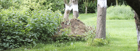 panorama view on a compost heap in a rural natural garden with stinging nettles growing