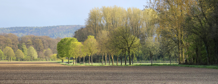 Panorama view on a rural tranquil landscape with lines of trees, woods and fields, in Lower Saxony, North Germany