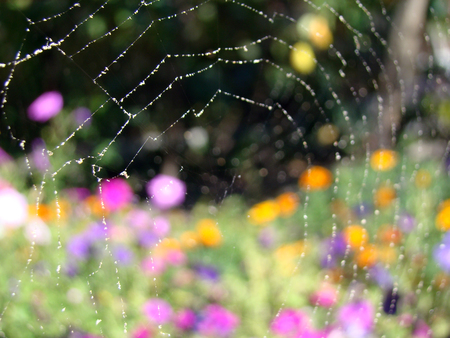 the web on which the water droplets on the background of colorful flowers