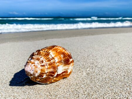 Photo pour Tropical beach with shells in the foreground on the sand and blurry sea, summer vacation, background. Travel and beach vacation, free space for text. - image libre de droit