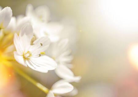 Photo pour Beautiful spring background with bokeh, copy space for text - image libre de droit