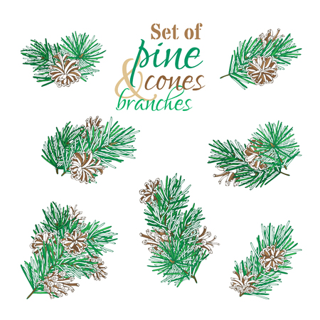 Vector pine branches isolated on white background. Pine branches with needles and cones. Vector nature illustration. Christmas design elements.