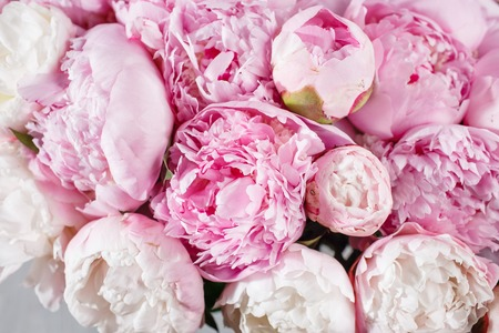 Photo for fresh bright blooming peonies flowers with dew drops on petals - Royalty Free Image