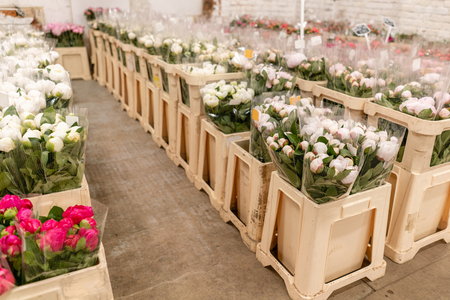 Photo pour Warehouse refrigerator, Wholesale flowers for flower shops. White peonies in a plastic container or bucket. Online store. Floral shop and delivery concept. - image libre de droit