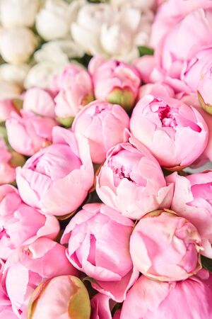 Photo for Floral carpet or Wallpaper. Background of pink and white peonies. Morning light in the room. Beautiful peony flower for catalog or online store. Floral shop and delivery concept . - Royalty Free Image