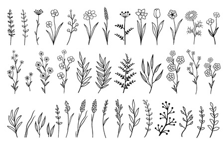 Illustration for hand drawn isolated flowers and herbs - Royalty Free Image