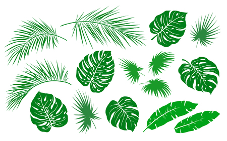 Illustration pour tropical green palm leaves and branches branches summer set on white background - image libre de droit