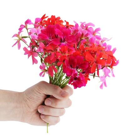Foto für Bouquet of the pink colors of geranium in the hand - Lizenzfreies Bild