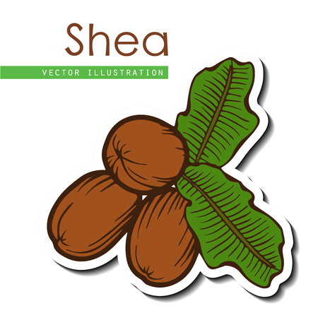 Illustration pour Shea nuts plant, berry, fruit natural organic butter ingredient. Hand drawn vector sketch engraved illustration. Brown Shea nuts sticker isolated on white background. Treatment, care, food ingredient - image libre de droit