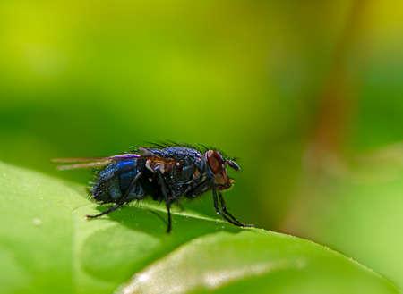 Foto de Macro of a fly o a green leaf - Imagen libre de derechos