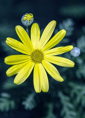 Photo pour Yellow flower - image libre de droit