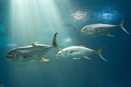 Fishes in Lisbon Oceanarium