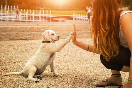 Photo for handshake between woman and dog - High Five - teamwork between girl dog - Royalty Free Image