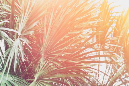 Summer holidays concept with palm trees, sun leak, , holiday background