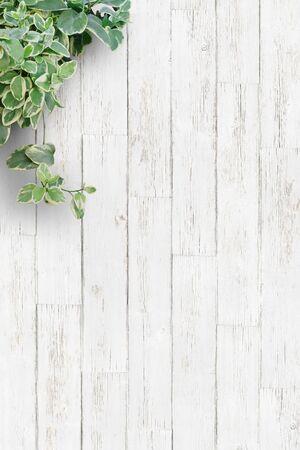 Foto de White background plate, houseplants, vertical - Imagen libre de derechos