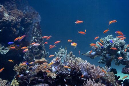 Photo pour A herd of coral and tropical fish at the bottom of the sea - image libre de droit