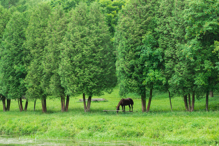 Portrait of horse in summer forest