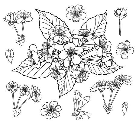 Illustration pour Black and white cherry flowers set for coloring book page vector - image libre de droit