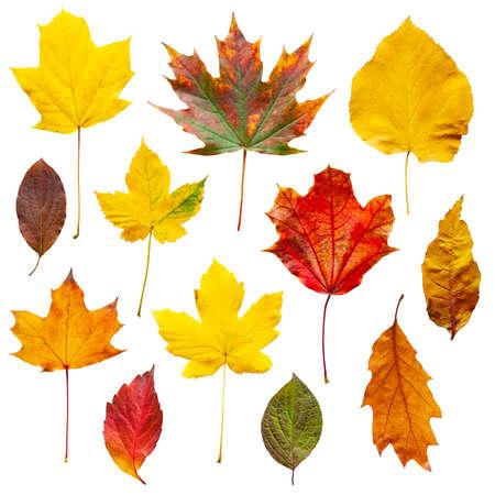Photo pour Colorful autumn leaves set isolated on white background - image libre de droit