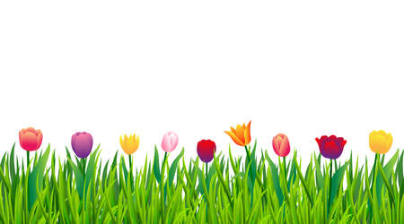 Illustration pour Colorful tulips with green grass isolated on white background. Vector illustration - image libre de droit