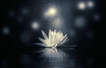 Photo pour abstract background with lotus flowers - image libre de droit