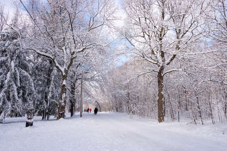 Photo for Montreal, CA - 01 January 2020: People walking on a snowy trail in Montreal's Mount Royal Park (Parc Du Mont-Royal) after snow storm. - Royalty Free Image