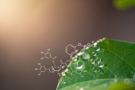 Photo for Plants background with biochemistry structure. - Royalty Free Image