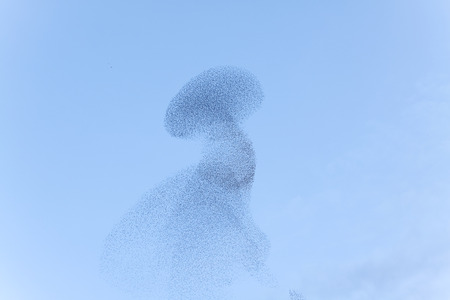 Birds swarm movements (blurred).
