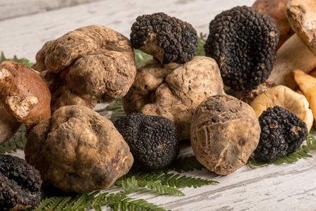 Photo pour group of white  black truffle and mushroom - image libre de droit