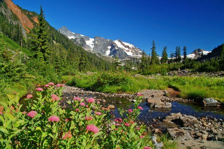Mountain meadow in the North Cascade mountains of Washington State