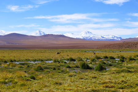 Foto per The landscape of northern Chile with the Andes Mountains and volcanoes with snow on the summit, Atacama Desert, Chile - Immagine Royalty Free