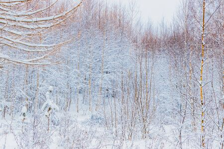 Photo pour Winter forest with snow and hoarfrost on trees - image libre de droit
