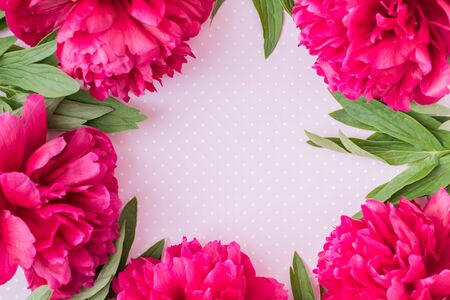Photo for Flat lay composition with red peonies and green leaves on a pink background - Royalty Free Image