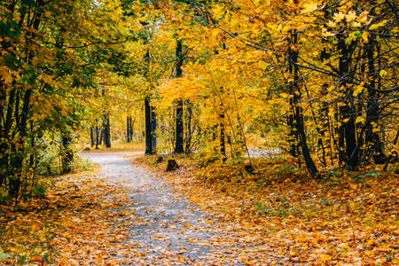 Photo pour Footpath in the autumn park with colorful trees and leaves - image libre de droit