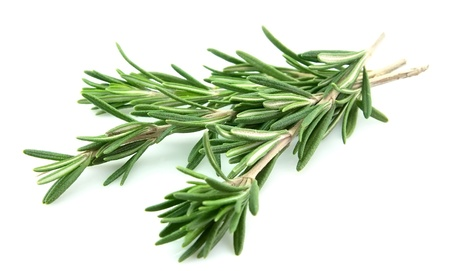 Fresh rosemary closeup on the white background