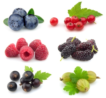 Sweet berries:blueberry,red currant,raspberry,black currant,gooseberry; mulberry
