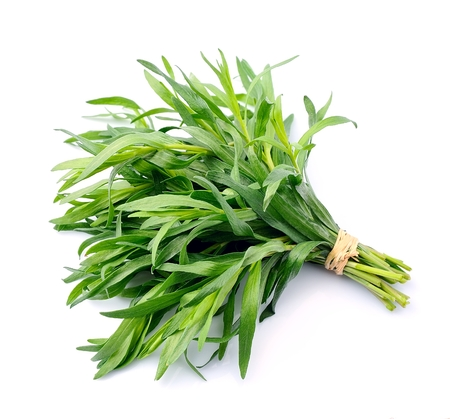 Tarragon herbs close up on white background.