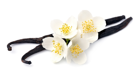 Photo for Vanilla sticks with white flowers on white backgrounds. - Royalty Free Image
