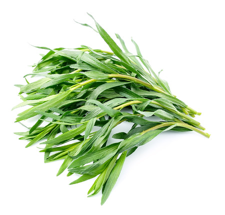 Tarragon herbs close up on white background