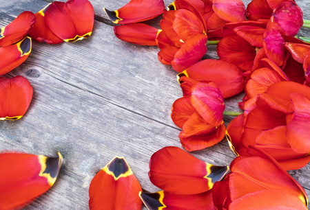 Foto de Petals of red tulips lie on the old boards. There is a place for your text. - Imagen libre de derechos