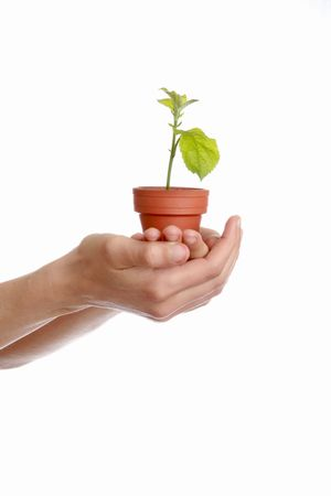plant in hand, protection of environment