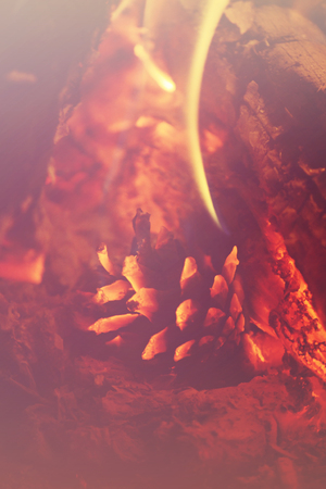 pine cone close-up in the fire, filter,