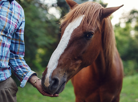 Portrait of horse eating from the man\'s hand outdoors. Friendship between animal and human concept.