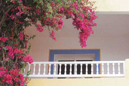 Photo for Flowers on the balcony. Romantic balcony with beautiful wicker flowers. - Royalty Free Image