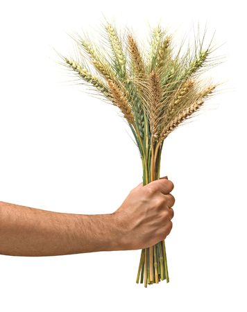 Farmer with wheat as a gift of agriculture