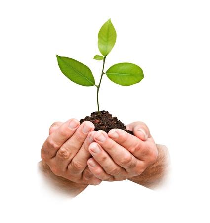 Photo pour Citrus sapling in hands - image libre de droit