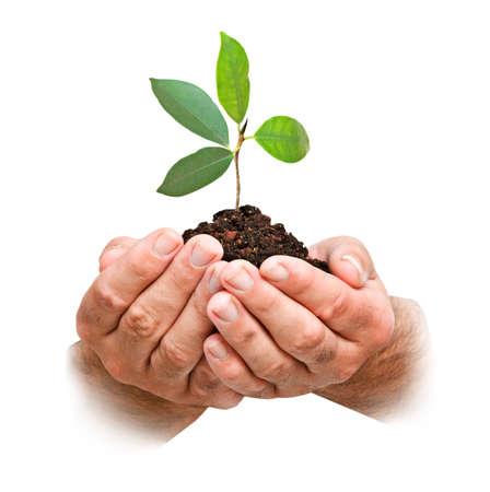 Photo pour sapling  in hands - image libre de droit
